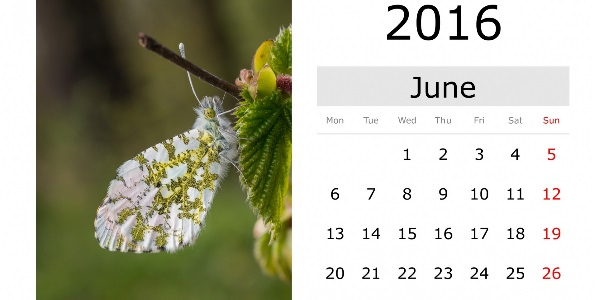 Este junio en MOOCs
