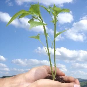 MOOC sobre emprendimiento social